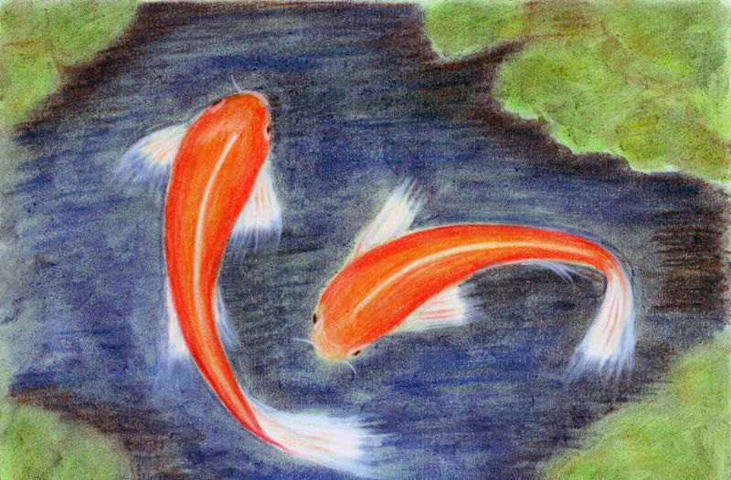A4 soft pastel Koi Fish